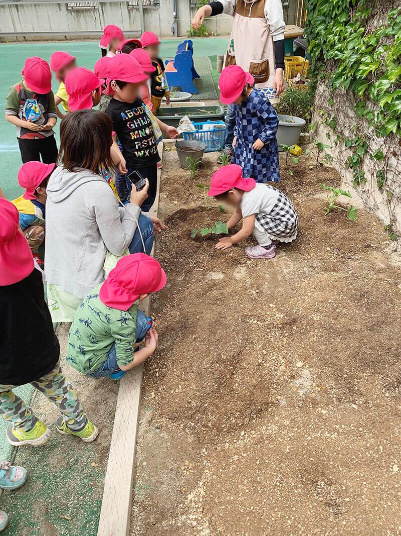 食育(園庭の畑で野菜作り)